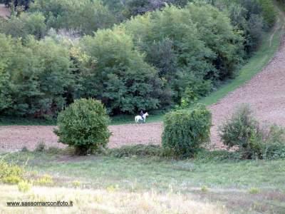 www-sassomarconifoto-it-010