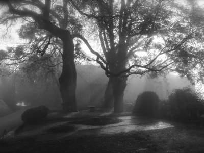 adriano-casalini-ricordi-tra-la-nebbia-nelle-nostre-colline