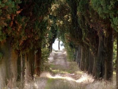 www-sassomarconifoto-it-024