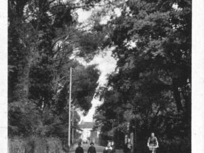 Viale dei Pini nel 1931